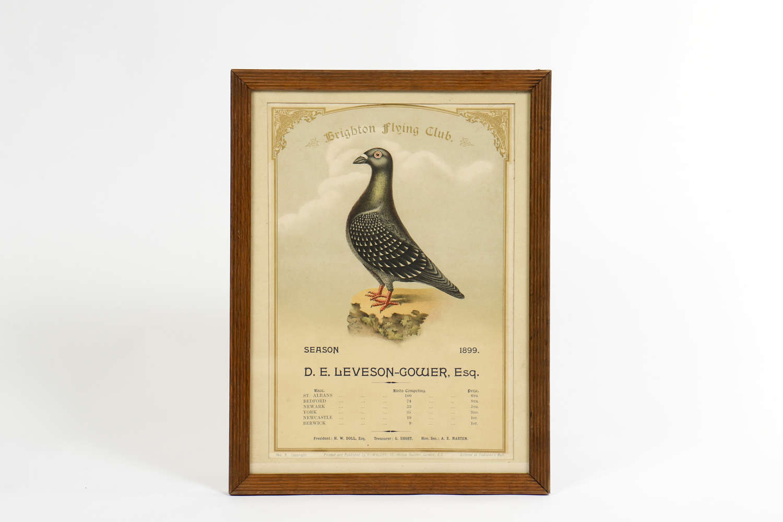 Brighton Flying Club Racing Pigeon Award